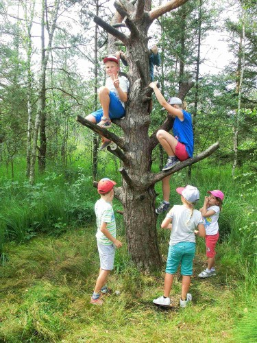 Jeder klettert einmal auf den Baum