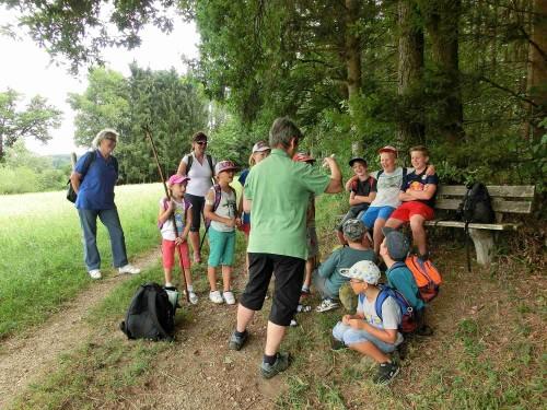 Vogelgruppen werden gebildet - Kiebitz, Bekassine und großer Brachvogel